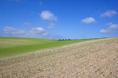 夏天豌豆庄稼 库存照片