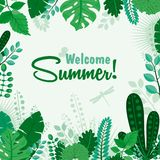 夏天贺卡或海报受欢迎的夏天叶子横幅的传染媒介例证 字法招呼的夏季 皇族释放例证