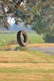 夏天轮胎摇摆在围场 库存照片