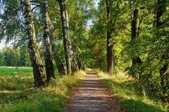 夏天道路在森林 免版税库存图片