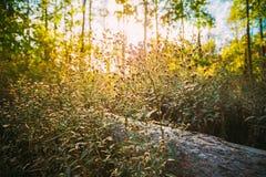 夏天野生植物在森林明亮的阳光下 免版税库存照片