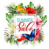 夏天销售概念 与热带花,蝴蝶的夏天背景 向量 免版税库存图片