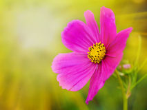 夏天阳光场面:在绿草的美丽的花 免版税库存照片