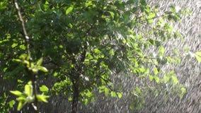 夏天降雨量充分的HD 股票录像