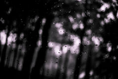 夏天雨在森林,小滴里 Bokeh 免版税图库摄影