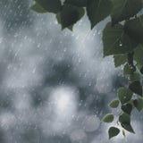 夏天雨 库存照片