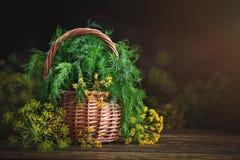 夏天静物画用新鲜的莳萝和葱 库存图片
