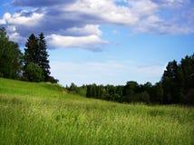 夏天领域在芬兰 免版税库存照片