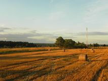 夏天领域的干草堆 在一个美好的夏天领域的被收获的干草 r 免版税库存照片