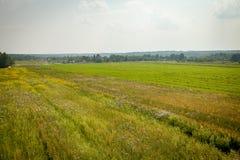 夏天领域,卡卢加州地区,俄罗斯 免版税库存照片
