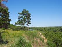 夏天风景。在一家陡峭的银行的两棵杉木树 库存照片