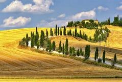 夏天风景在托斯卡纳在夏天 免版税库存照片