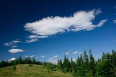 夏天风景在有一朵大云彩的森林在蓝天 库存照片