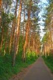 夏天风景在森林里 免版税库存图片