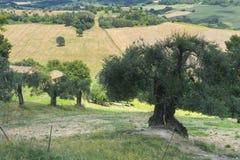 夏天风景在翁布里亚(意大利) 免版税库存照片