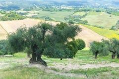夏天风景在翁布里亚(意大利) 免版税图库摄影