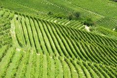 夏天风景在Langhe (意大利) 免版税图库摄影