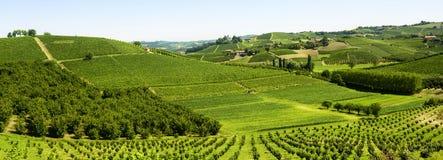 夏天风景在Langhe (意大利) 库存照片