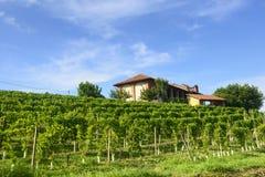 夏天风景在Monferrato (意大利) 免版税库存图片