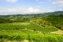 夏天风景在Monferrato (意大利) 图库摄影