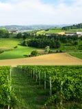 夏天风景在Monferrato (意大利) 免版税库存照片