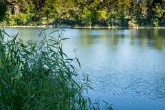 夏天风景水和树 免版税库存图片