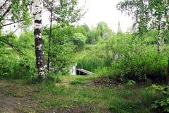 夏天风景池塘和树 免版税库存照片