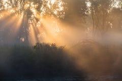 夏天风景浓雾在橡木树丛里 免版税库存图片