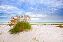 夏天风景用海燕麦和草沙丘 免版税库存图片