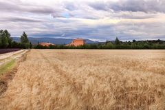 夏天风景用麦子和淡紫色在普罗旺斯调遣 库存照片