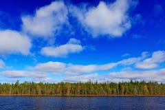 夏天风景的结尾从芬兰的 杉木与湖ans深蓝天空的森林海岸与白色云彩 从nort的美好的风景 库存照片