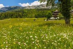 夏天风景,奥地利 免版税库存图片