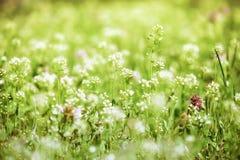 夏天风景,有花的绿色草甸 库存照片