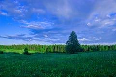 夏天风景,桦树草甸,天空在背景中 库存图片
