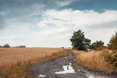 夏天风景:在一个领域的路用成熟的麦子,天空与 免版税图库摄影