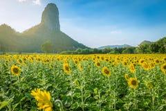 夏天风景:在向日葵的秀丽日落调遣与温暖的光 库存图片