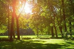 夏天风景-有绿色夏天树的晴朗的夏天城市公园在晴朗的天气 库存图片