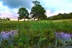夏天风景 免版税库存图片