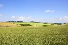 夏天麦子庄稼 库存照片