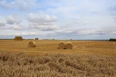 夏天麦子收获 免版税库存照片