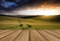 夏天麦田的风景图象在日落的与美好的l 免版税库存图片