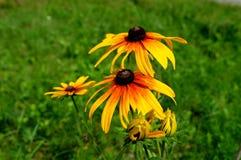 夏天黄色flowers…在城市公园 开花自然 免版税库存照片