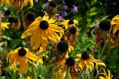 夏天黄色flowers…在城市公园 开花自然 库存图片