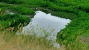 夏天,天,从小山的看法向有草的河在前景 股票录像