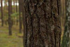 夏天,秋天在狂放的森林里 图库摄影