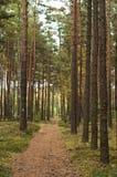 夏天,秋天在狂放的森林里 库存图片