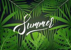 夏天 与字法和回归线密林的现代设计布局离开 夏天异乎寻常的背景 免版税库存图片