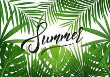 夏天 与异乎寻常的palnts的热带背景 夏天销售的,促进,党事件横幅 库存照片