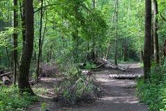 夏天 击倒由说谎在道路的风暴和被锯的桦树树干在森林 免版税图库摄影