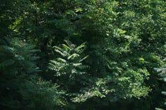 夏天绽放的森林 免版税库存图片